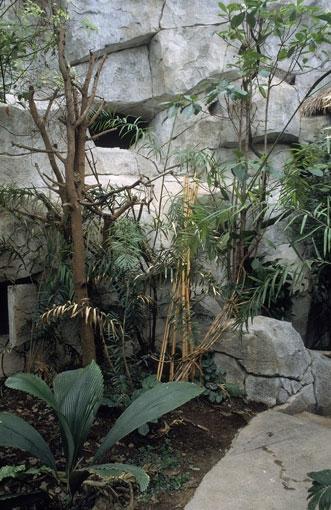 Tropenhaus für ostasiatische Tiere